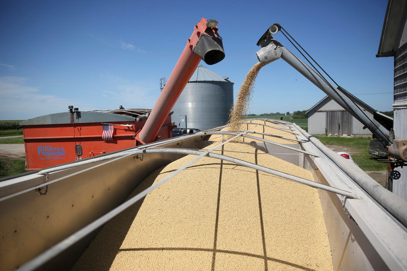 Corn, wheat, soy rally on U.S.-China trade hopes, export demand