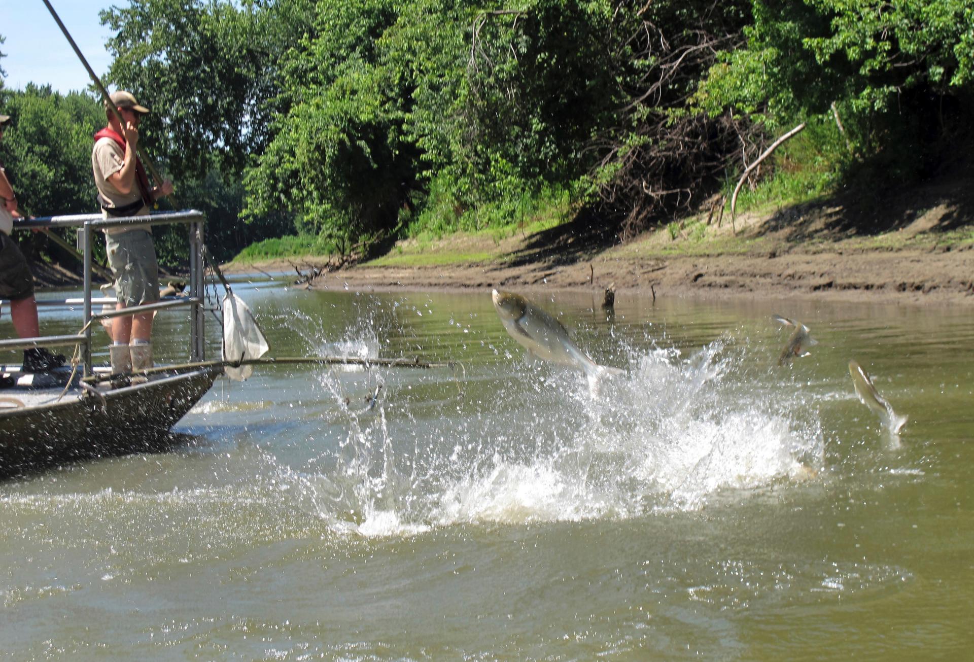 Illinois governor OKs first steps on blocking Asian carp