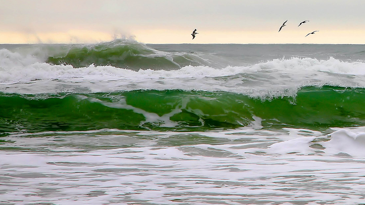 Killer waves, shark encounters for tourists along popular US beaches