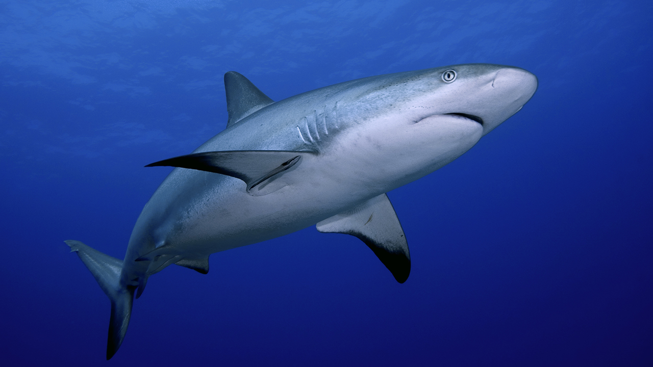 Cape Cod releases anti-shark plans following record number of shark sightings