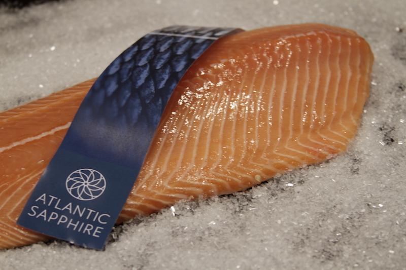 Salmon fish farm in Florida aims to take over US market